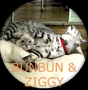 Bun-Zig2-adj