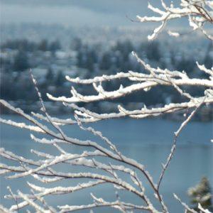 snow-twig