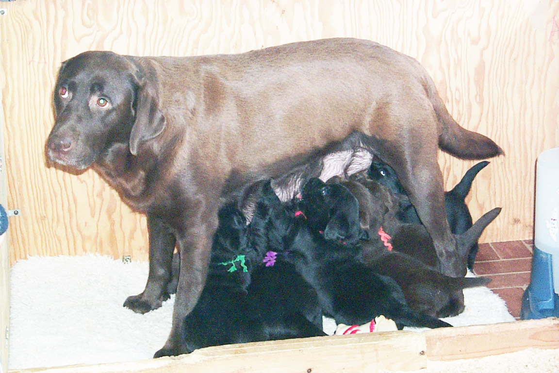Nashoba with her Mom and siblings