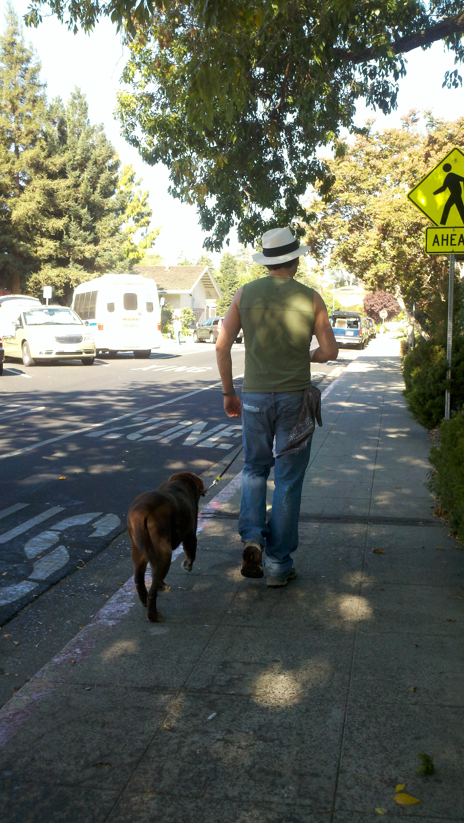 Nashoba walking with Alan in Redwood City